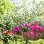 toukokuu 2013, puutarhakuvia