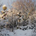 Matti Luostarinen. Cluster garden. The First snow. Ensilumi.