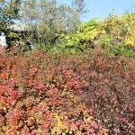 Matti Luostarinen, Cluster art. The garden of cluster art, Autumn colors